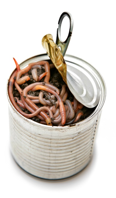can-of-worms.jpg