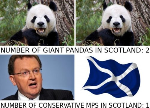 scottish_pandas_tories